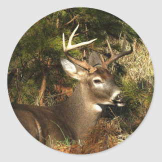 "Cade""s Cove Buck Round Sticker"