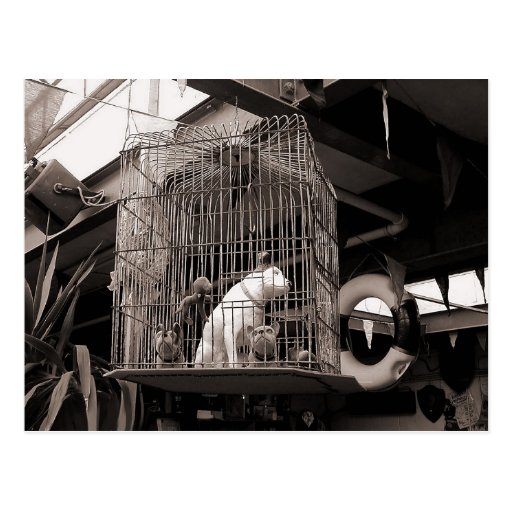 Caged Beasts Post Cards