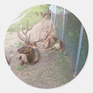 caged deer elk reindeer round sticker