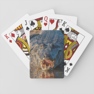 Caiman shows its teeth, Brazil Playing Cards