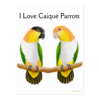 Caique Parrot Love Postcard