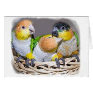 Caiques on a basket card