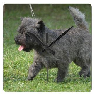 cairn-terrier-2.jpg square wall clock