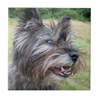 Cairn Terrier dog beautiful tile or trivet, gift