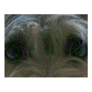 cairn terrier eyes postcard