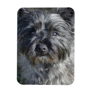 Cairn Terrier Face Magnet