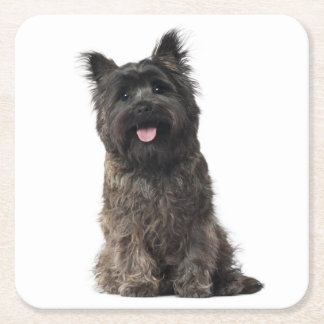Cairn Terrier Gray Black Puppy Dog Love Square Paper Coaster