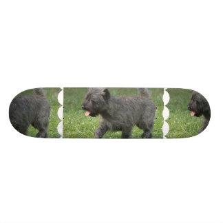 Cairn Terrier Skateboard Decks