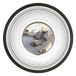 cairn terrier sleepin on beach.png