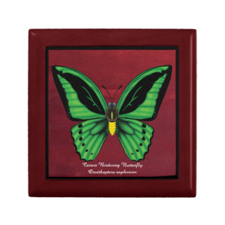 Cairns Birdwing Butterfly Gift Box