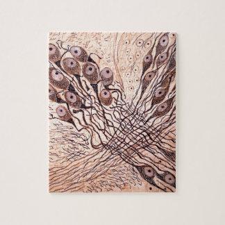 Cajal's Neurons 1 Jigsaw Puzzle
