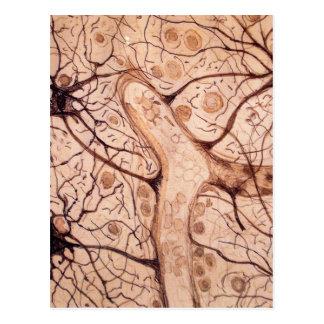 Cajal's Neurons 3 Postcard