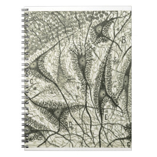 Cajal's Neurons 4 Notebooks
