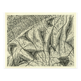 Cajal's Neurons 4 Postcard