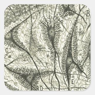 Cajal's Neurons 4 Square Sticker