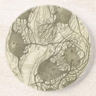Cajal's neurons 6 coaster