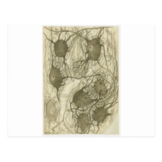 Cajal's neurons 6 postcard