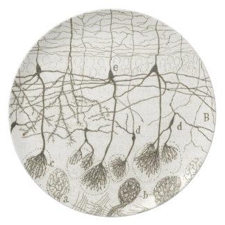 Cajal's Neurons 8 Plate