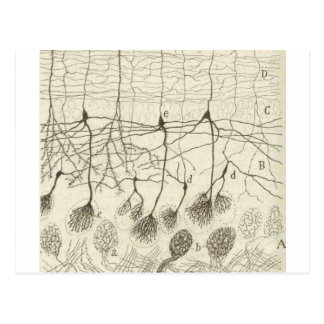 Cajal's Neurons 8 Postcard