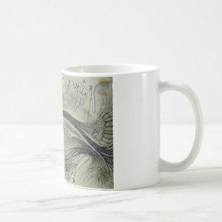 Cajal's spinal neurons - 5 basic white mug