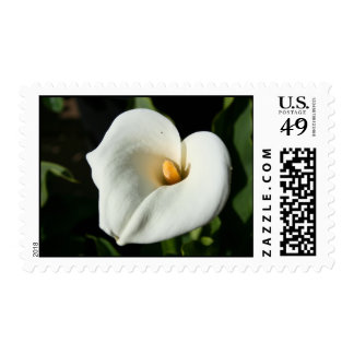Cala Lily Flower Postage