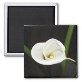 Cala Lily Magnet 2 Inch Square Magnet