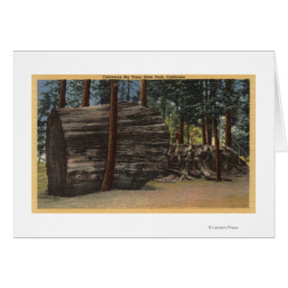 Calaveras Big Trees State Park Card