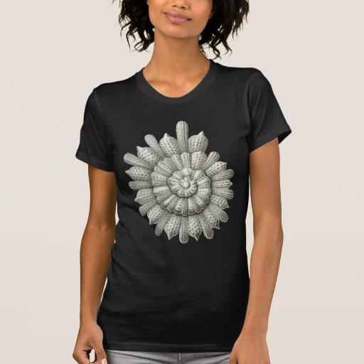 Calcarina clavigera Vintage Animal Fine Haeckel T-shirt
