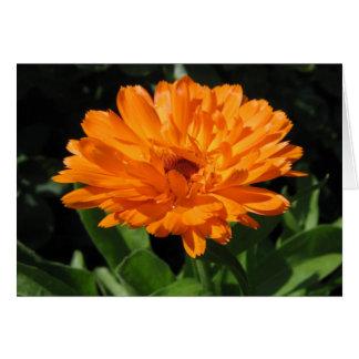 Calendula flower greeting card