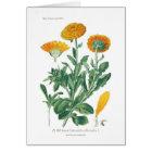 Calendula officinalis (Pot marigold) Card