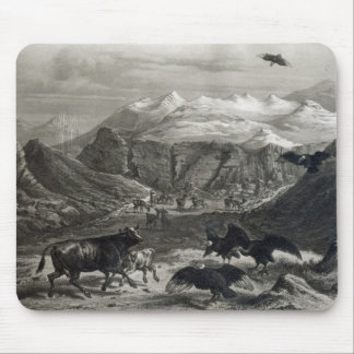 Calf being attacked by the Condors Mouse Mat