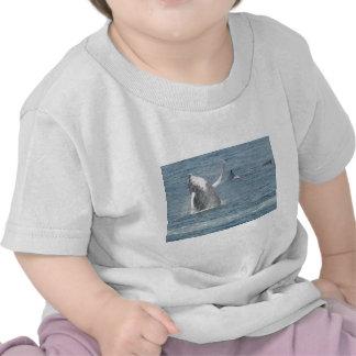 Calf breach t-shirt