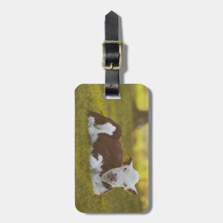 Calf resting in rural landscape. bag tag