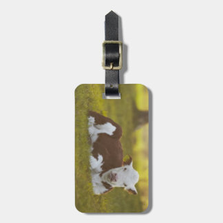 Calf resting in rural landscape. luggage tag