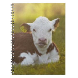 Calf resting in rural landscape. notebook
