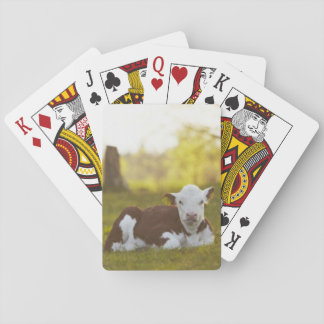Calf resting in rural landscape. playing cards