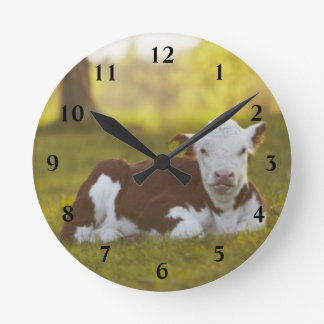 Calf resting in rural landscape. round clock