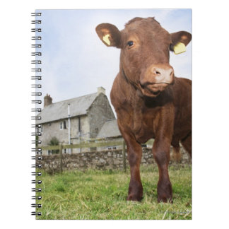 Calf standing in meadow notebook