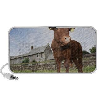 Calf standing in meadow travelling speaker