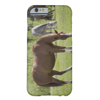 Calgary, Alberta, Canada 2 Barely There iPhone 6 Case