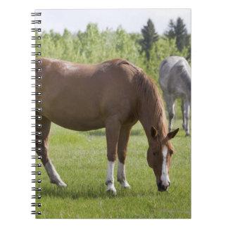 Calgary, Alberta, Canada 2 Notebooks