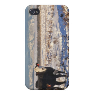 calgary, alberta, canada case for the iPhone 4
