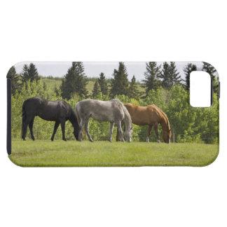 Calgary, Alberta, Canada Tough iPhone 5 Case