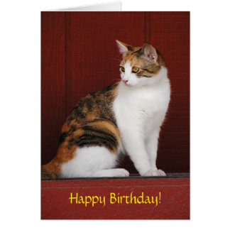 Calico Cat Birthday Card