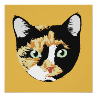 Calico Cat Bonita