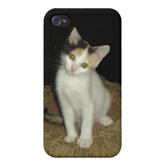 Calico Cat  iPhone 4 Case