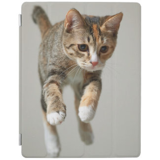 Calico Cat Jumping iPad Cover