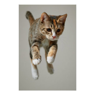 Calico Cat Jumping Poster