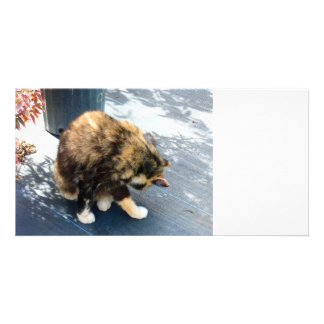 calico cat licking hind legs photo greeting card