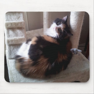 Calico Cat on Cat Tree Mouse Pad